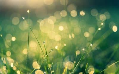 Greenwashing : les 8 erreurs à éviter